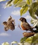 leaving the nest_dr-com1
