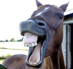 laughing-horses-6