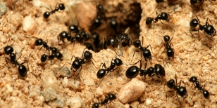small-ants