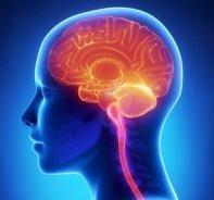 Neurology-307x287